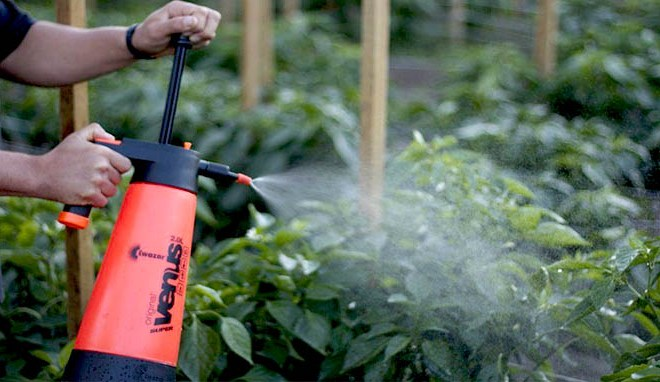 Best Weed Killers Review (Sep, 2019) - A Complete Guide