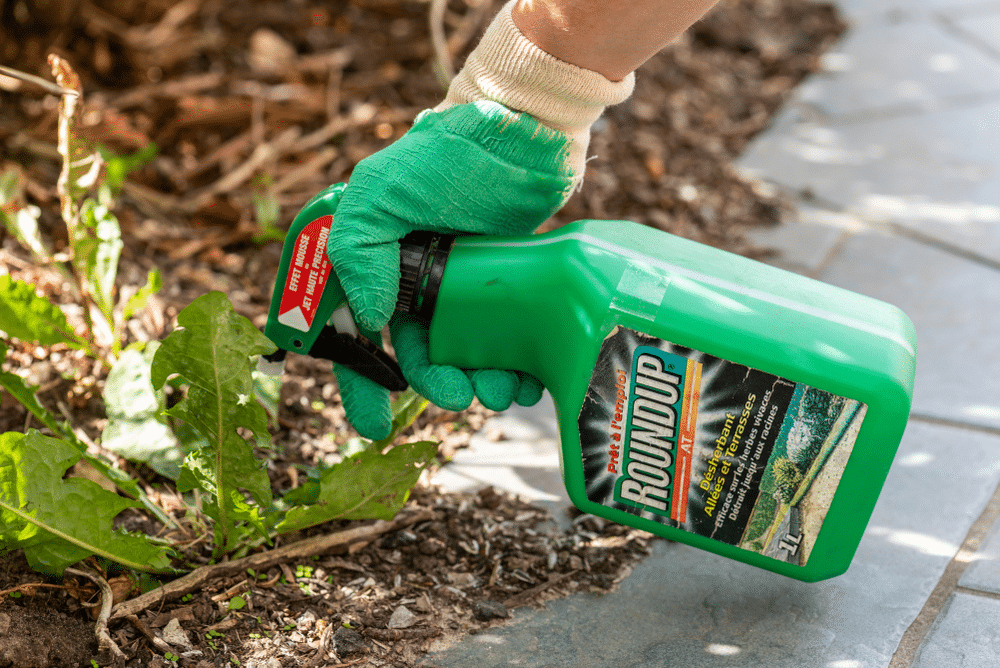 Best Weed Killers Review (July, 2019) - A Complete Guide