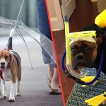 11 Dogs Whose Rain Game is on Point
