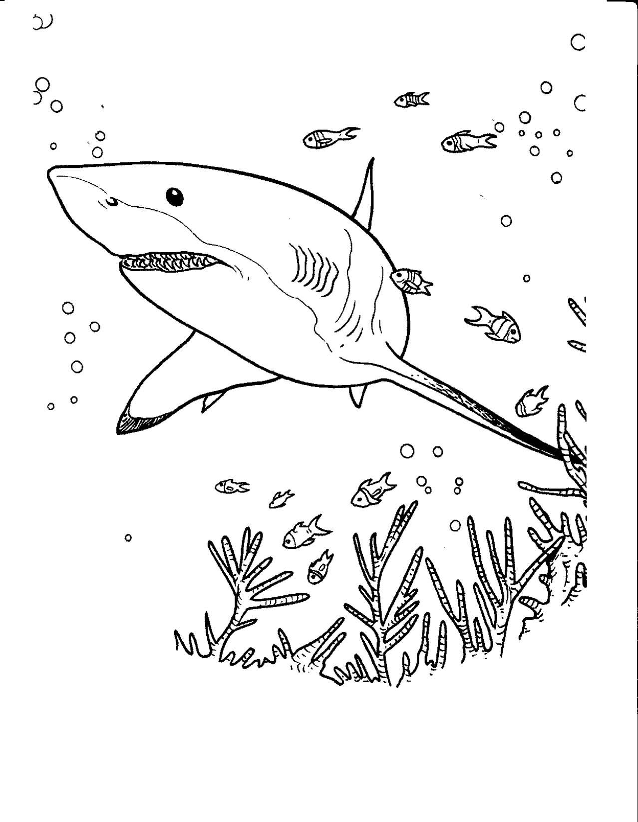 19 Dessins De Coloriage Requin Blanc Imprimer A Imprimer