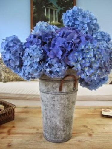 Blue_Purple Flowers