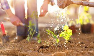outdoor family activities
