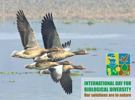 What's Behind the Logo of this year's International Day for Biodiversity?