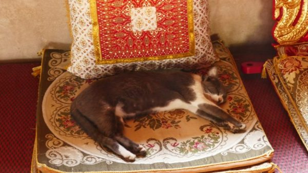 animals on our adventures: cat in the temple | Buzzy Bee Bike, Chiang Mai, Thailand