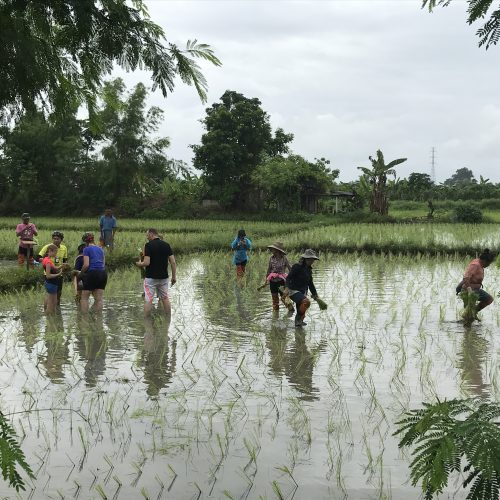 rice planting | Buzzy Bee Bike, Chiang Mai, Thailand
