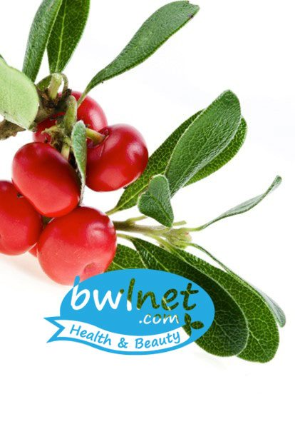 bwlnet-bearberry-leaf-extract