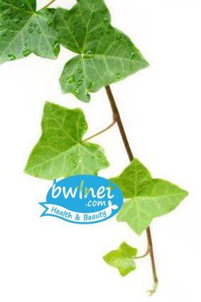 bwlnet-english-ivy-extract