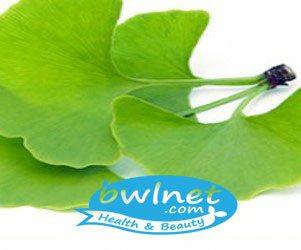 bwlnet-gingko-biloba-leaf-extract