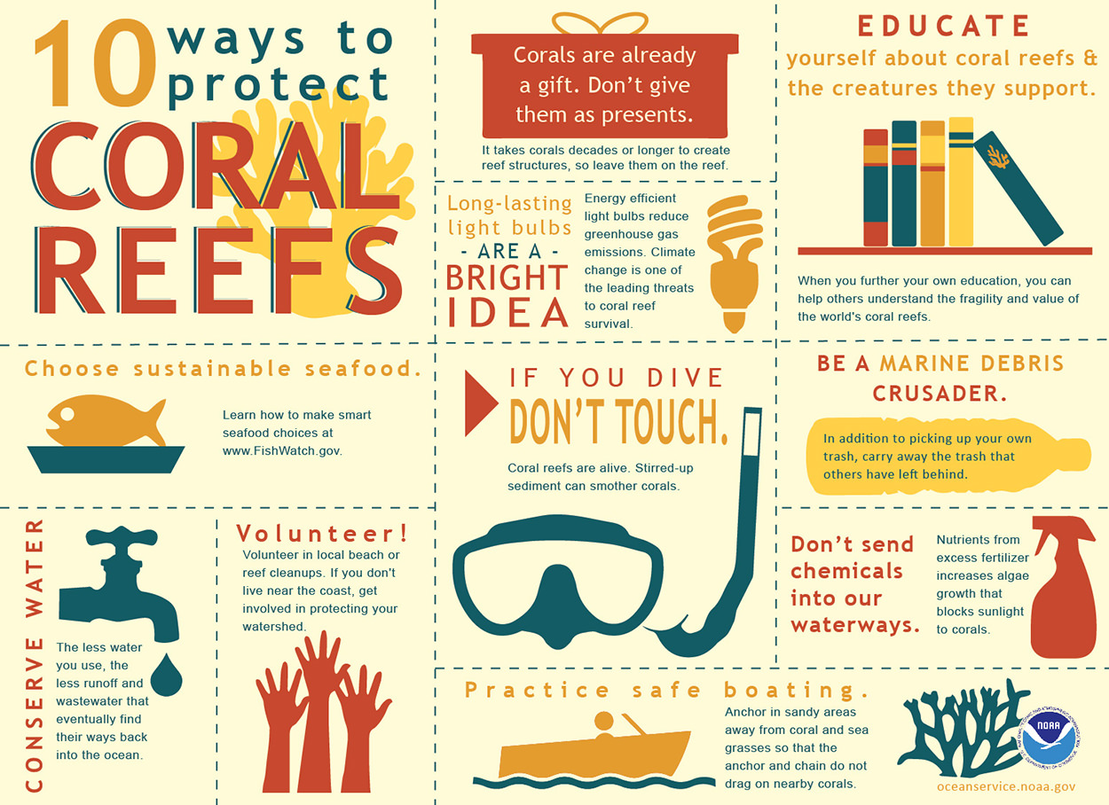 How Everyone Can Protect Coral Reefs