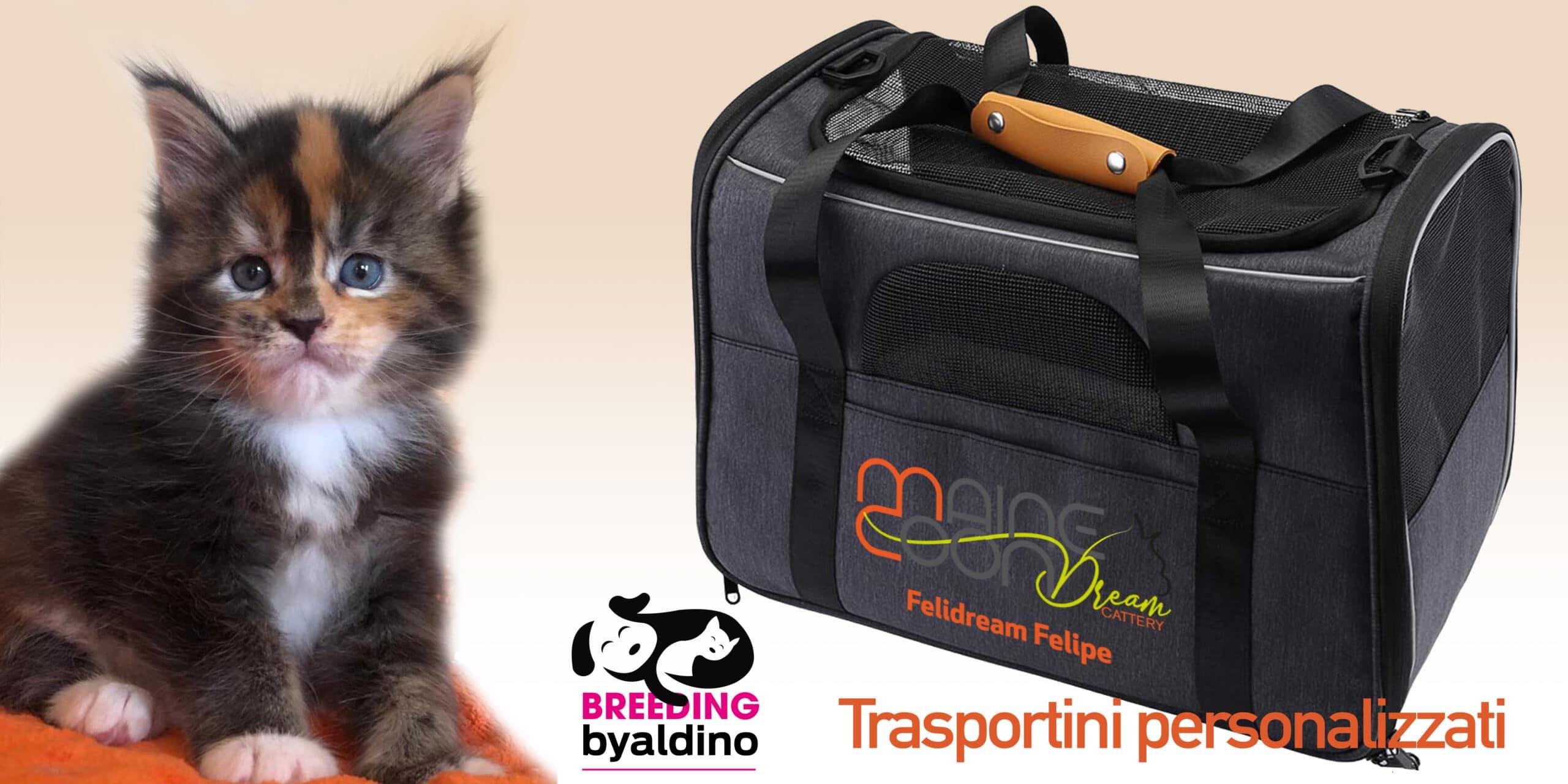 trasportini-SLIDE