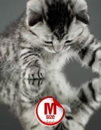 PartoM Cat