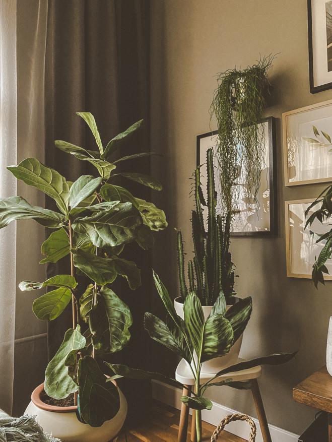 Alp Duran, Indoor Plants
