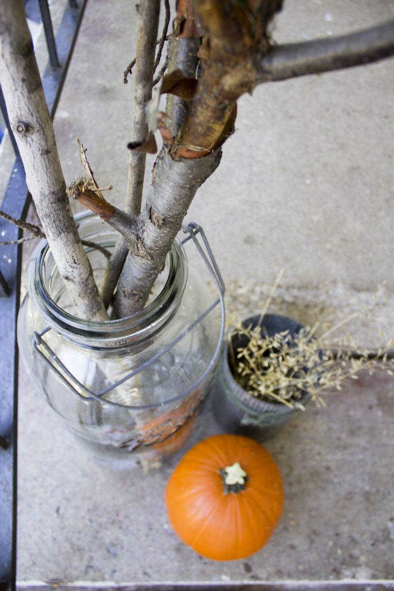 fall-weeds5