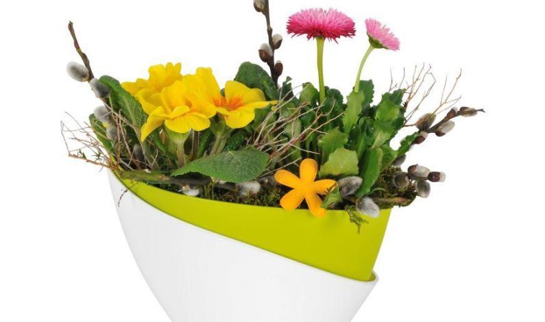 Zelená oáza i ve vašem bytě
