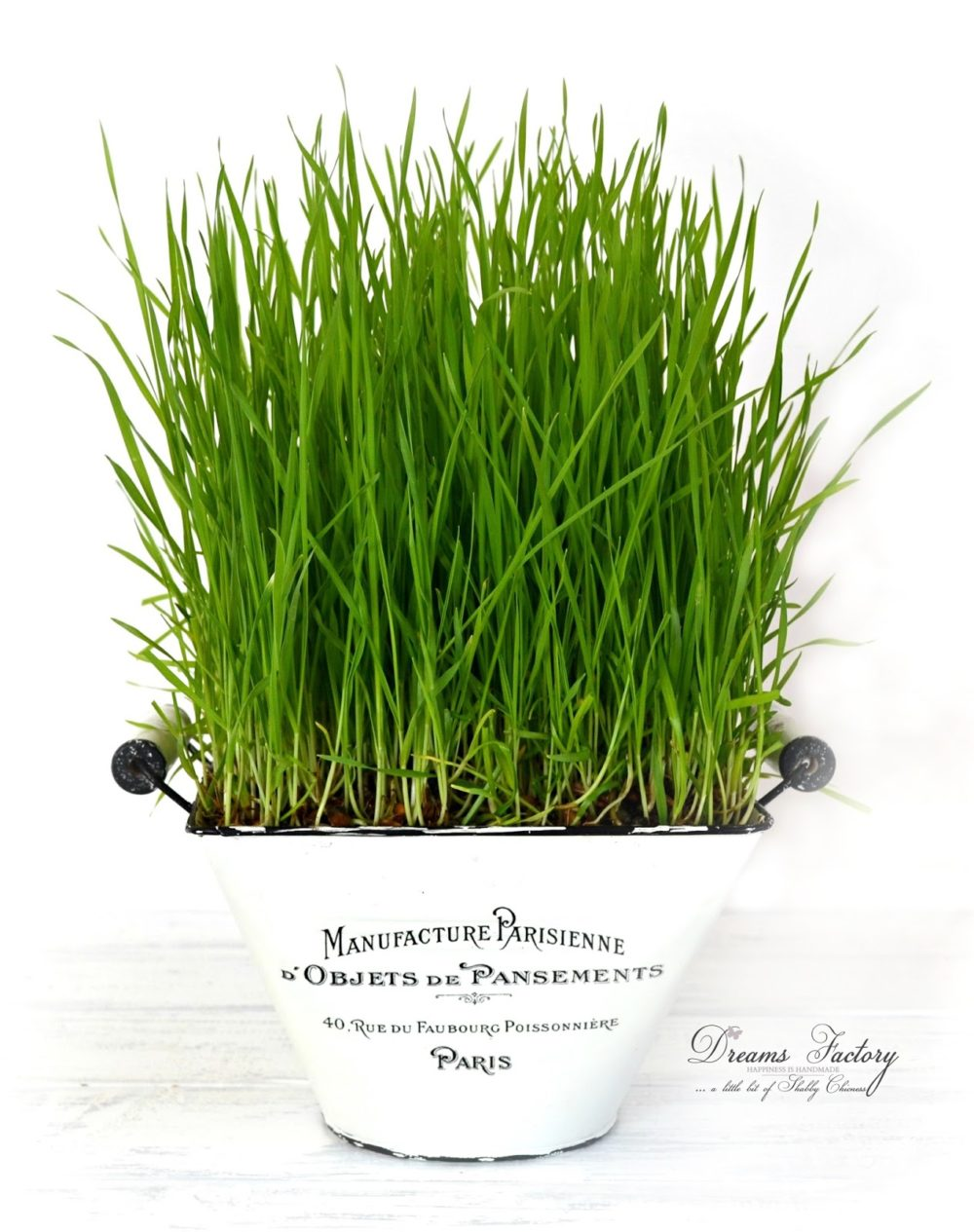 How to grow wheatgrass for juicing & decorating