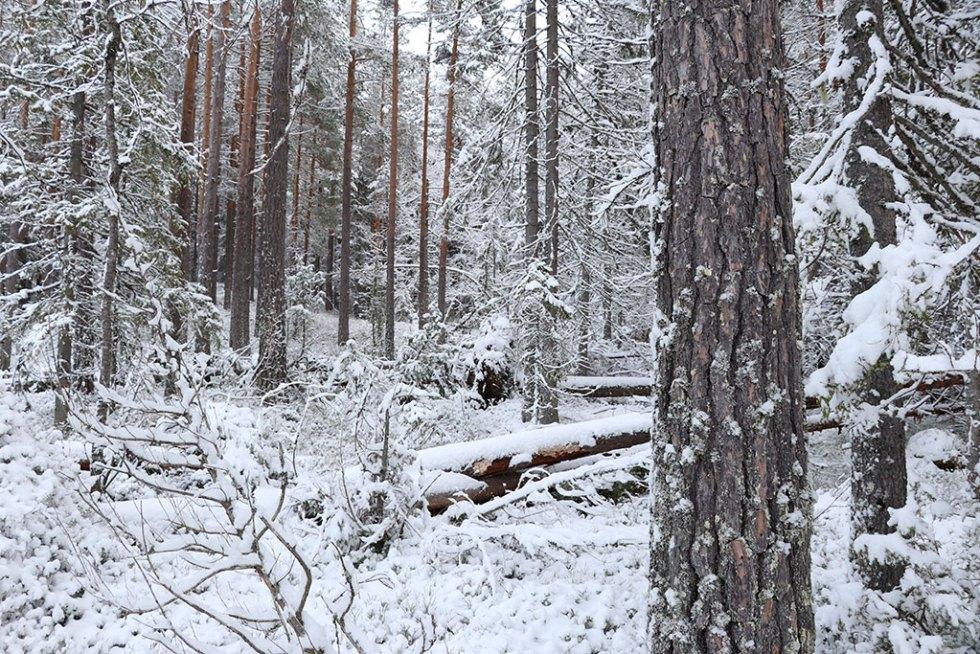 Vinterlandskab i Norge, Telemarken