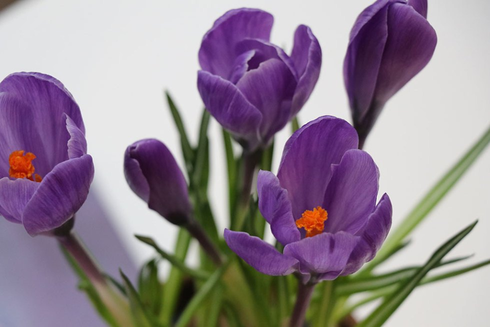 Februar og forårsplaner, inspiration