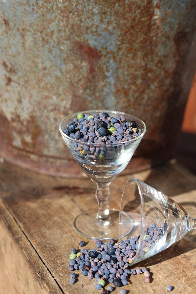 Sådan tørrer du enebær - krydderi til madlavning, simreretter eller gin