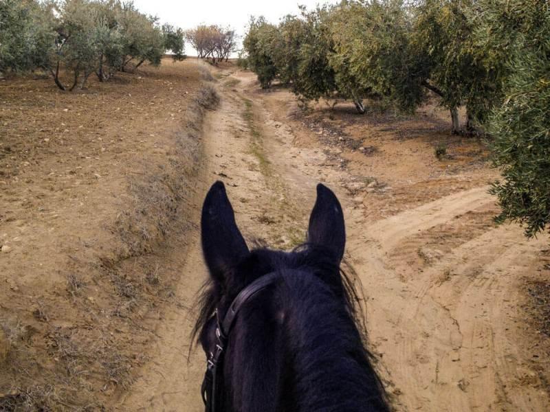 Vierbeinige Begleiter Bonita Oliven