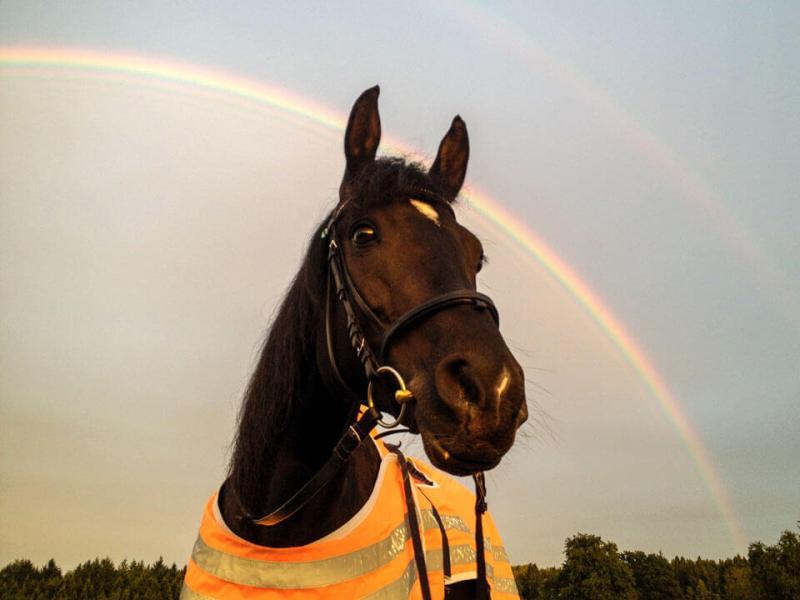 Vierbeinige Begleiter Bonita Rainbow