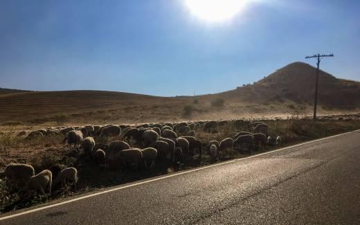 Sommerzeit - Ferienzeit - Sommerpause - Schafherde
