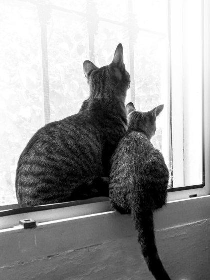 Tierische Begleiter Dafne - Fenster