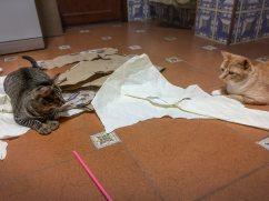 Tierische Begleiter Dafne mit Runa
