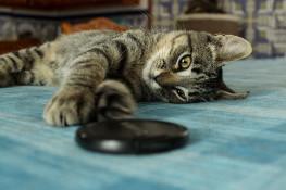 Tierische-Begleiter_Ronda__Spielen-auf-Tisch