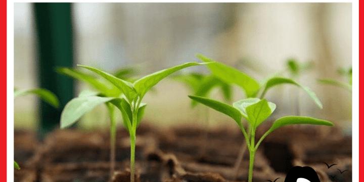 Des conseils ici pour un jardinage facile