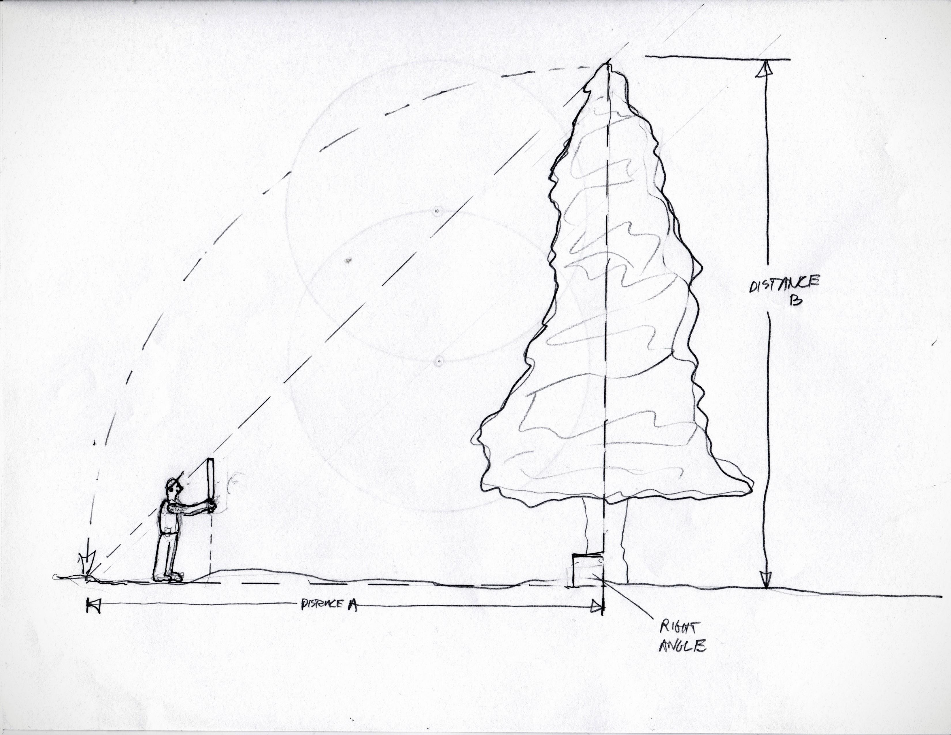 Tree ht (1)
