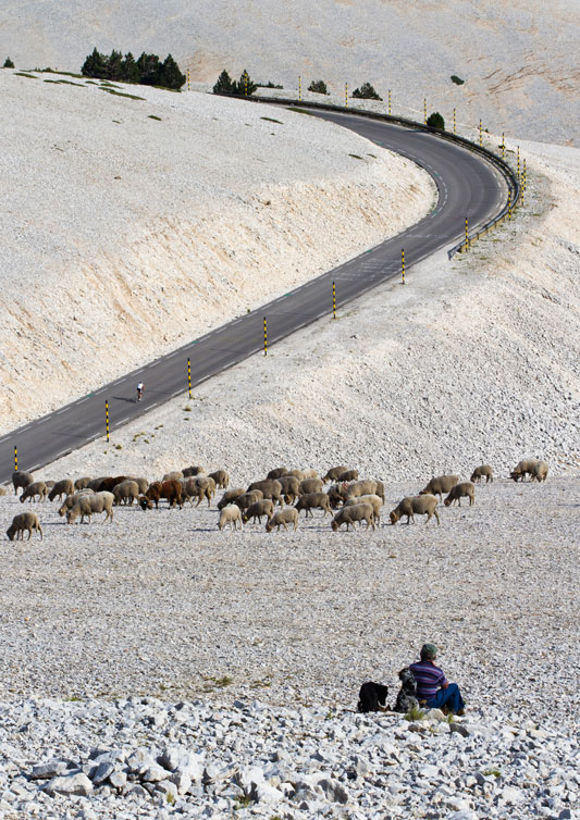 Me-Berge-et-ses-moutons-du-Ventoux