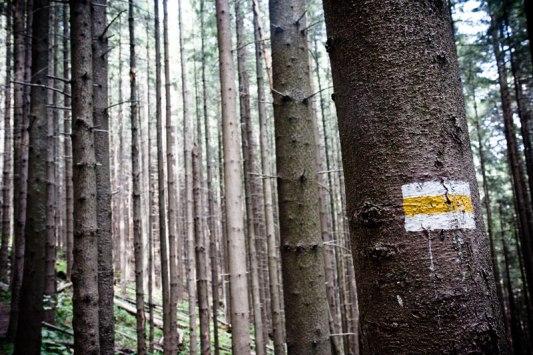 Tatras-wood-002