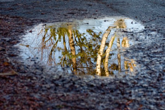 reflets-arboricole