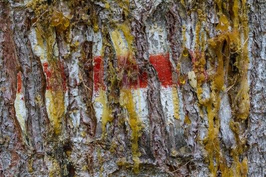 FlickR-Abstrait-102
