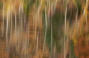 Abstract of trees reflecting in the surface of a river in the fall #110108-105