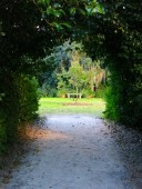 Pathways at Middleton Place
