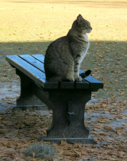 Even the cat takes time to appreciate his surroundings.