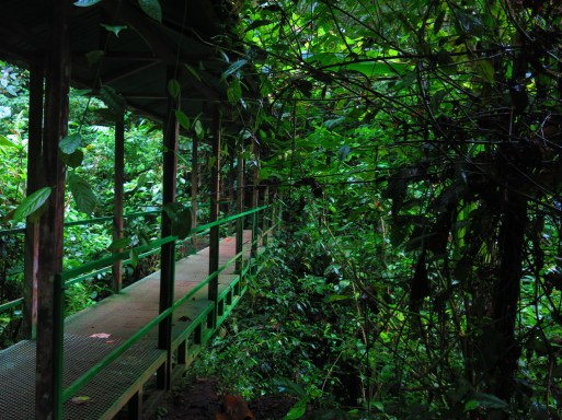 Bridge in the rainforest