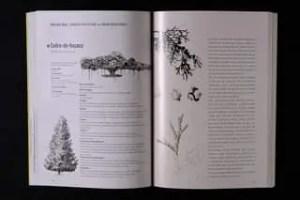 Pode ser uma imagem de árvore