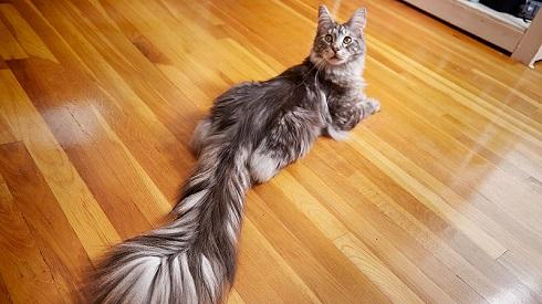 猫の長い尻尾