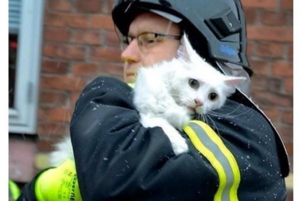 火事場で救出の猫