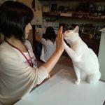 猫とハイタッチ