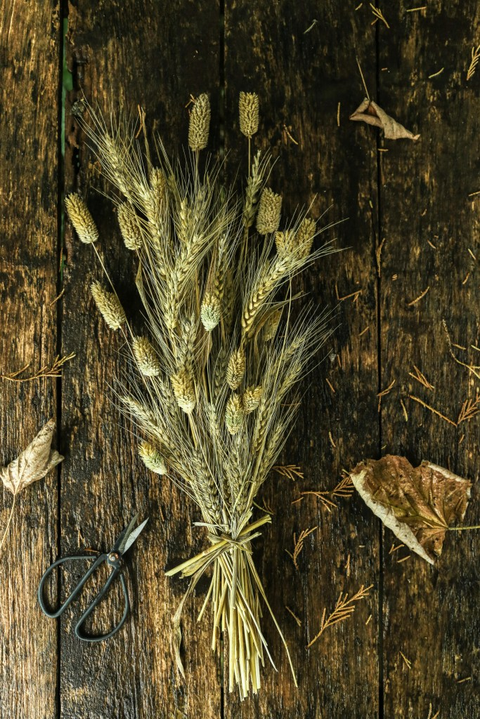 Wheat and Scissors for the Feast of First Fruits - byZipporah Blog