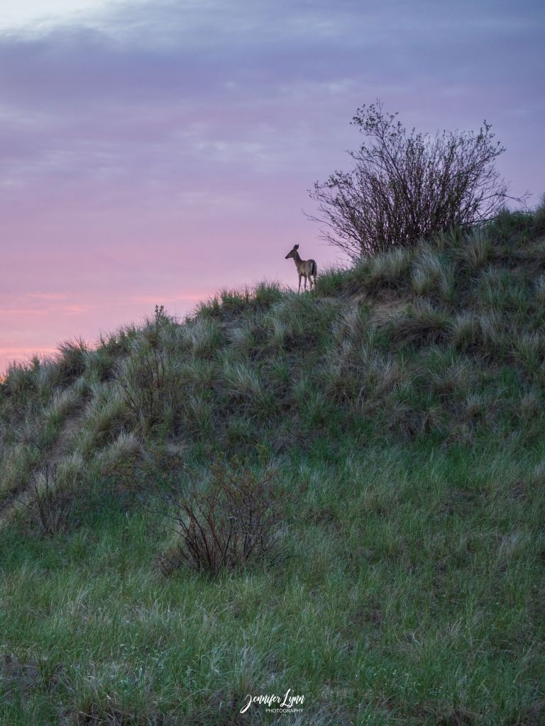 Jennifer Christensen, A Deer Enjoys the Sunset