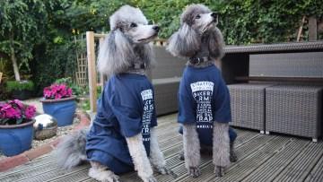 c3-marketing-news-stroll-dogs-at-work-1