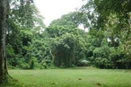 hutan-suranadi