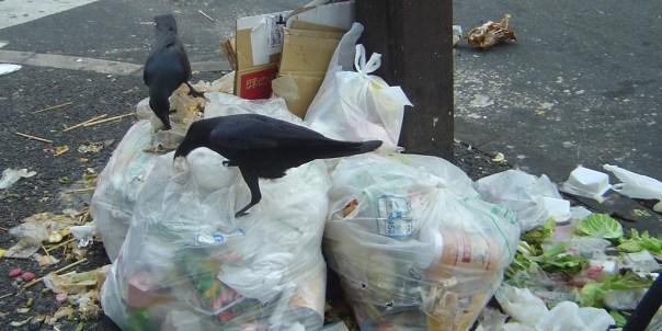 Tokyo_Ikebukuro_trash_crows_dsc05654
