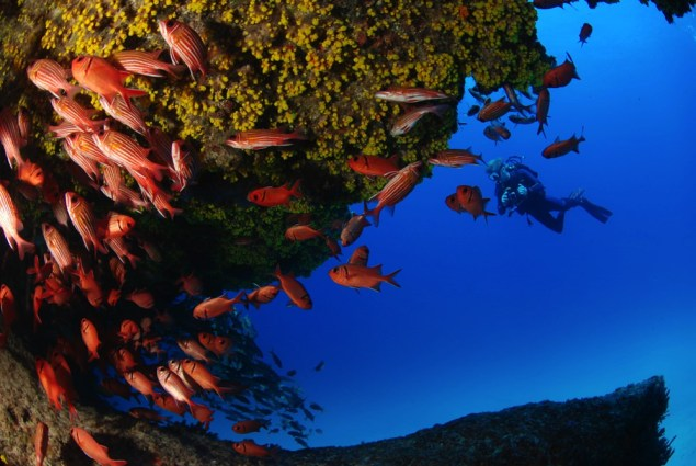 Dive sites choclassa Cabo Verde3
