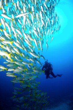 Dive sites choclassa Cabo Verde6