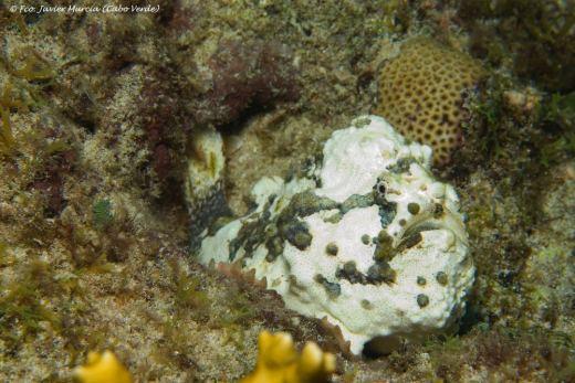 Dive sites farol Cabo Verde1